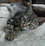Симпатичные котята в дар