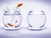Опытный маркетолог или специалист - рекламщик,  маркетинговый аутсорсинг
