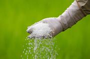 Минеральные удобрения. Гибриды семян кукурузы, подсолнечника на посев 2