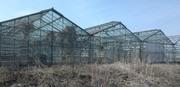 Продается имущественный комплекс - тепличное хозяйство 8377 кв.м