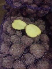 Картофель оптом от производителя 8 руб/кг