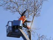 Спил деревьев,  обрезка,  расчистка участка